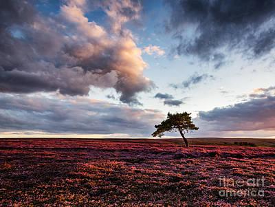 Lone Tree Egton Moor Print by Janet Burdon