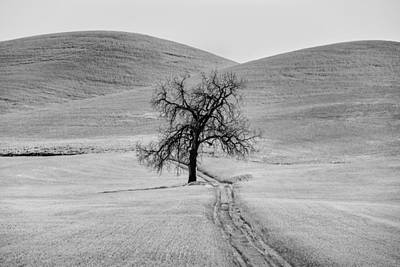 Lone Tree In The Palouse Print by Jon Glaser