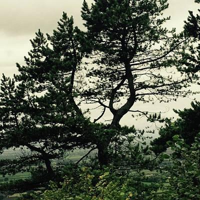 Sutton Digital Art - Lone Tree by Karen Cessford