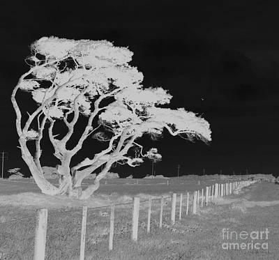 Windblown Digital Art - Lone Tree, West Coast by Nareeta Martin