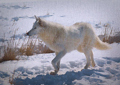 Spririt Photograph - Lone White Wolf by OLenaArt Lena Owens