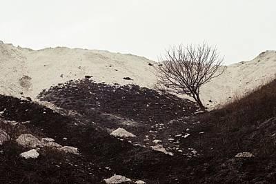 Terra Firma Photograph - Lonely Tree by Anton Popov