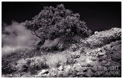 Alone Photograph - Lonely Tree  Crete by Robert Brown