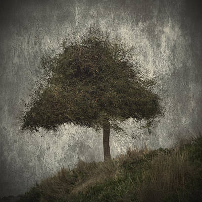 Solitude Photograph - Lonely Tree by Stelios Kleanthous
