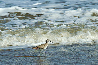 Dowitcher Photograph - Long-billed Dowitcher by Bill Morgenstern