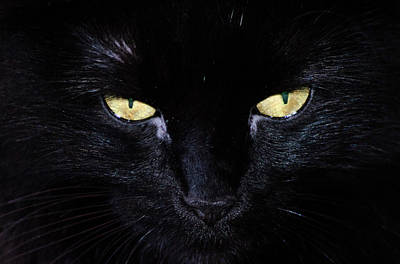 Kitty Photograph - Look Into My Eyes by Camille Lopez