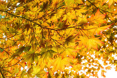 Vivacious Digital Art - Look Up And Enjoy The Brilliant Autumn Colors by Georgia Mizuleva