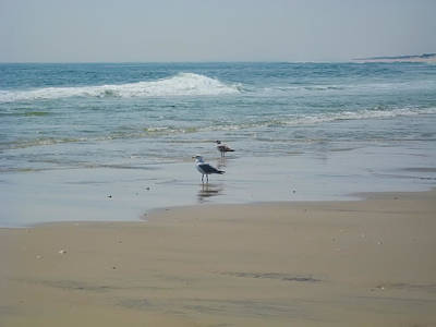 Seagull Digital Art - Looking Out Into The Sea by Bill Cannon