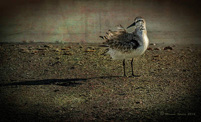Sandpipers Photograph - Looking Pretty by Marvin Spates