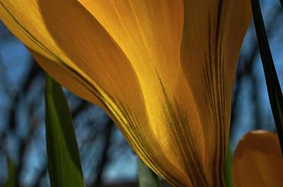 Looking Up At A Yellow Crocus Print by ShaddowCat Arts - Sherry