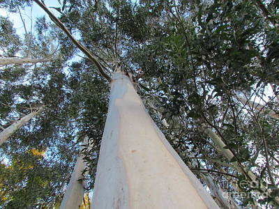 Photograph - Looking Up To The Sty by Joyce Woodhouse