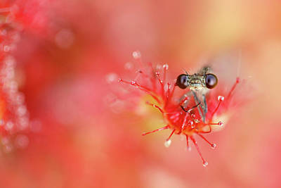 Carnivorous Photograph - Lost In Red by Roeselien Raimond