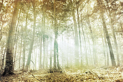 Forest Photograph - Lothlorien by Violet Gray