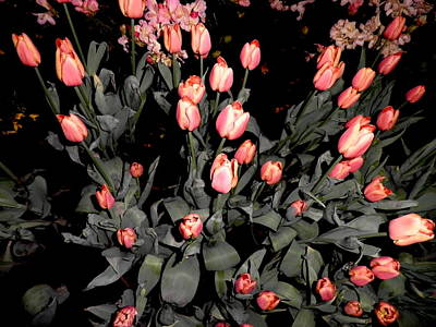 Lots Of Tulips Print by Kate Gallagher