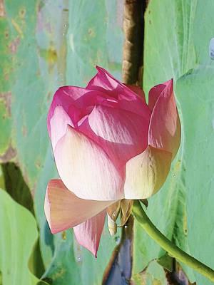 Flower Pyrography - Lotus by Artistic Panda