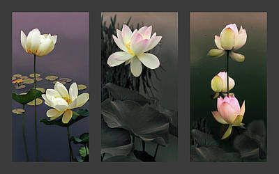 Lilies Digital Art - Lotus Collection II by Jessica Jenney