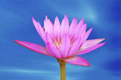 Garden Digital Art - Lotus Flower by Ridwan Photography