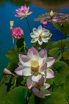 Prado Photograph - Lotus Pool by Chris Lord