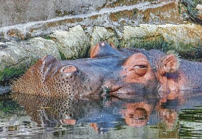 Hippopotamus Digital Art - Lu Nap Time by Dennis Dugan