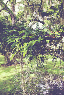 Photograph - Louisiana Fern by Scott Pellegrin