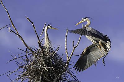 Bird Nest Photograph - Love At First Sight by Everet Regal