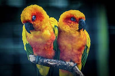 Lovebird Digital Art - Love Birds by Chris Lord