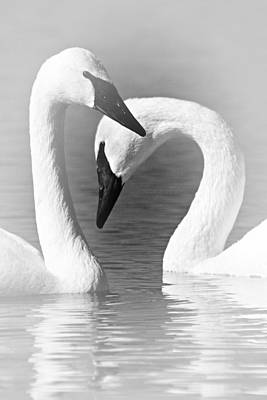 Love In Black And White Print by Larry Ricker