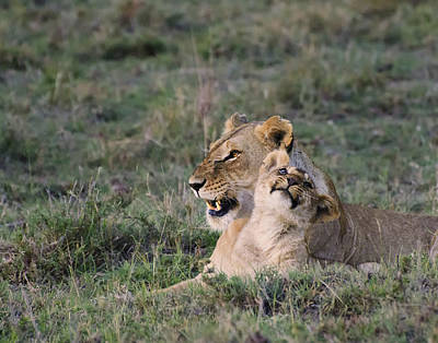 Love In The Masai Mara Print by Marion McCristall