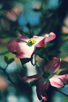 Dogwood Photograph - Love Is Such A Beautiful Thing by Laurie Search