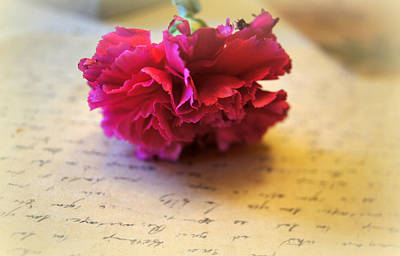 Pink Carnation Photograph - Love Letters Straight From The Heart by Kathy Bucari