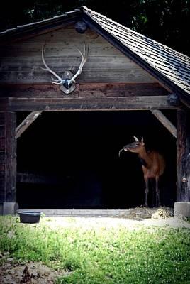 Elk Photograph - Love Of Nature Elk 2011 by Laura Pineda