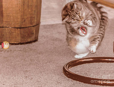 Gray Tabby Photograph - Love Playing by Claudia M Photography