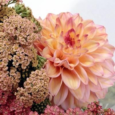 Garden Photograph - Dahlia Flower Bouquet by Blenda Studio