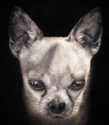 Lovely And Stylish Chihuahua Dog Print by Ingo Menhard