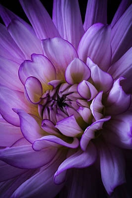 Lovely Photograph - Lovely Dahlia by Garry Gay