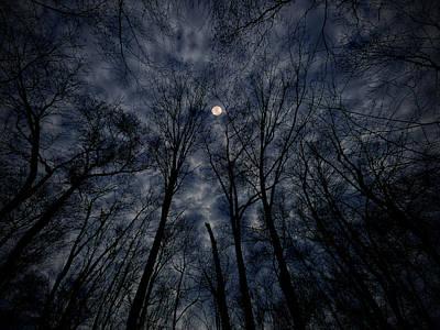 Reaching Up Digital Art - Lovely Dark And Deep by Robert Geary
