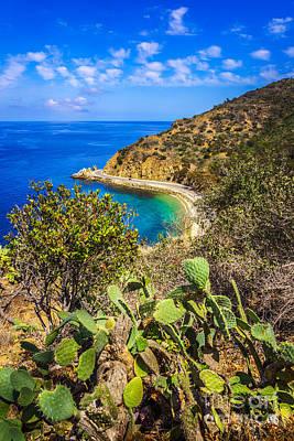 Santa Catalina Island Photograph - Lover's Cove Catalina Island Aerial Photo by Paul Velgos