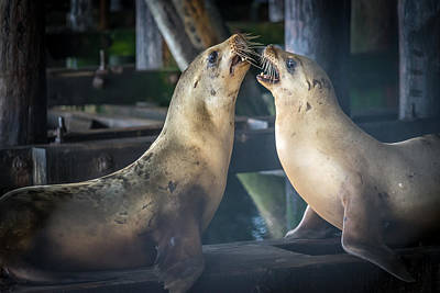 Santa Cruz Pier Photograph -  Harbor Seals Lovers Quarrel by James Hammond