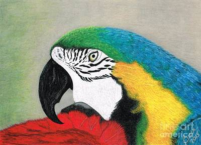 Macaw Drawing - Lucky Mac by Becca Miller