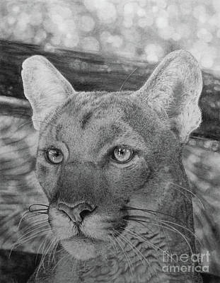 Panther Drawing - Lucy by Jennifer Watson
