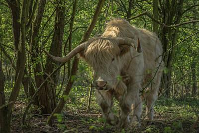 Scruffy Photograph - Lumbering by Chris Fletcher
