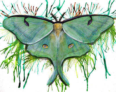 Luna Moth Drawing - Luna Moth by Danielle Trudeau