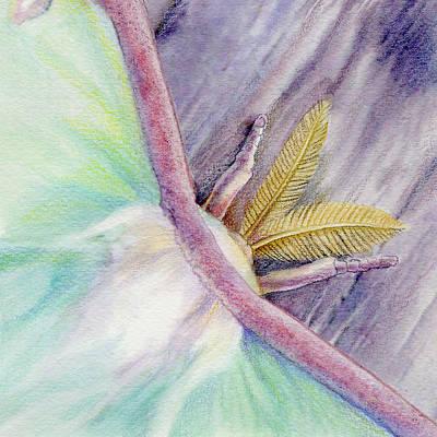 Luna Moth Drawing - Luna Moth by Mindy Lighthipe