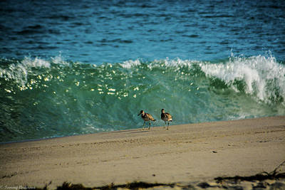 Photograph - Lunch Time On The Beach by Tommy Anderson
