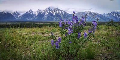 Lupine Photograph - Lupine Beauty by Chad Dutson