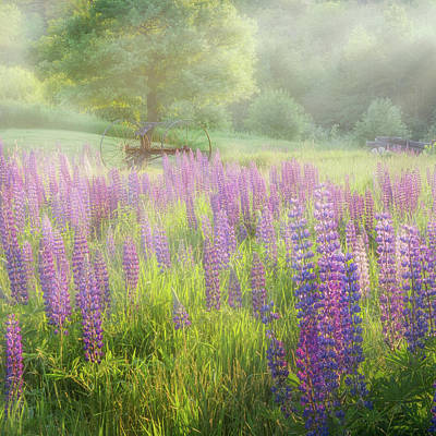 Serene Photograph - Lupine Morning Square by Bill Wakeley