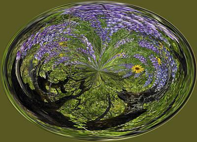 Lupine Orb By Jean Noren Print by Jean Noren