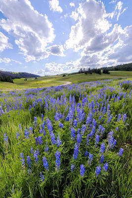 Pass Photograph - Lupine Pass by Chad Dutson