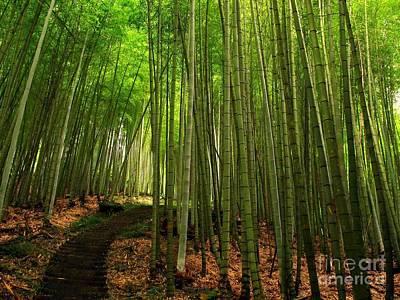 Bamboo Photograph - Lush Bamboo Forest by Yali Shi