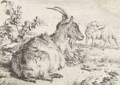 Goat Drawing - Lying Goat by Adriaen van de Velde